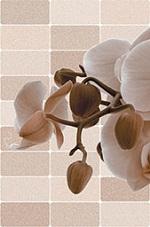 Gạch ốp tường Prime 30x45 09337